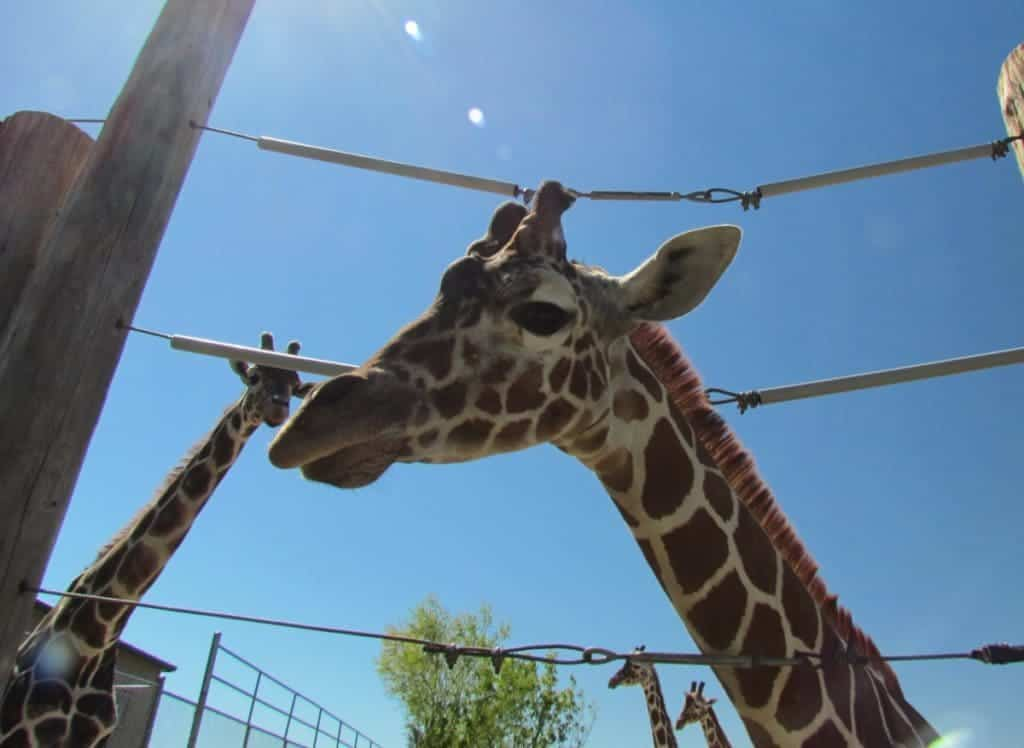 Tanganyika Wildlife Park - Wichita attractions - Endangered Animals - Animal encounters - Wildlife