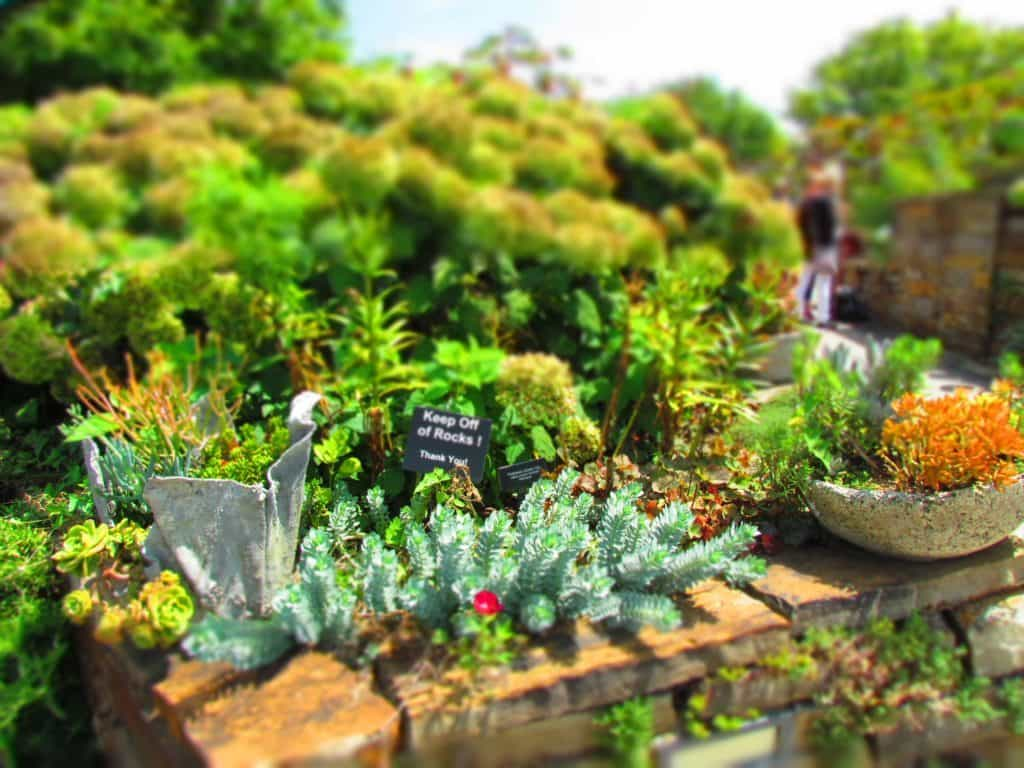 A variety of succulents are featured in many of the sun gardens at Powell Gardens.