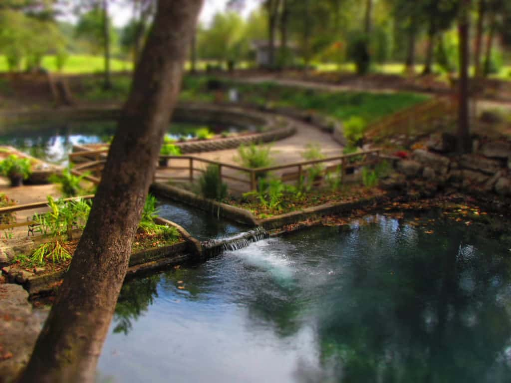 The waters of Blue Spring flow out of its basin and into the tributary that leads to the White River.