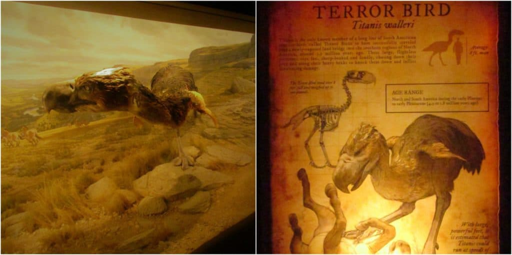 The museum begins with displays on the creatures that once prowled the land.