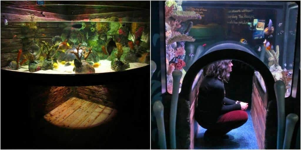 Some exhibits allow visitors to view the displays from an underwater perspective.