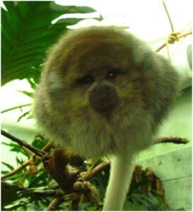 A small primate investigates the camera lens.