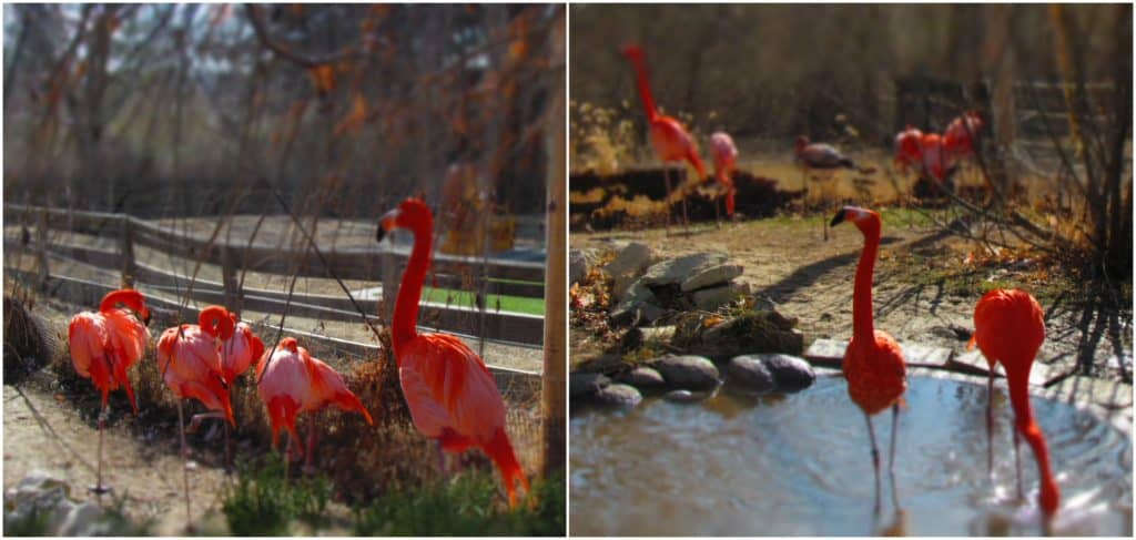 Flamingoes enjoy the sunshine on a warm winter day.