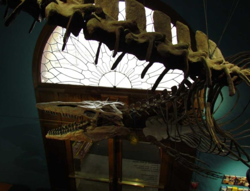 KU Museum of Natural History – 4 Floors Of Fun