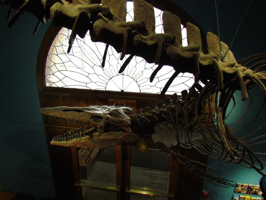 Kansas University-Museum of Natural History-fossils-prehistoric-animals-science-bugs