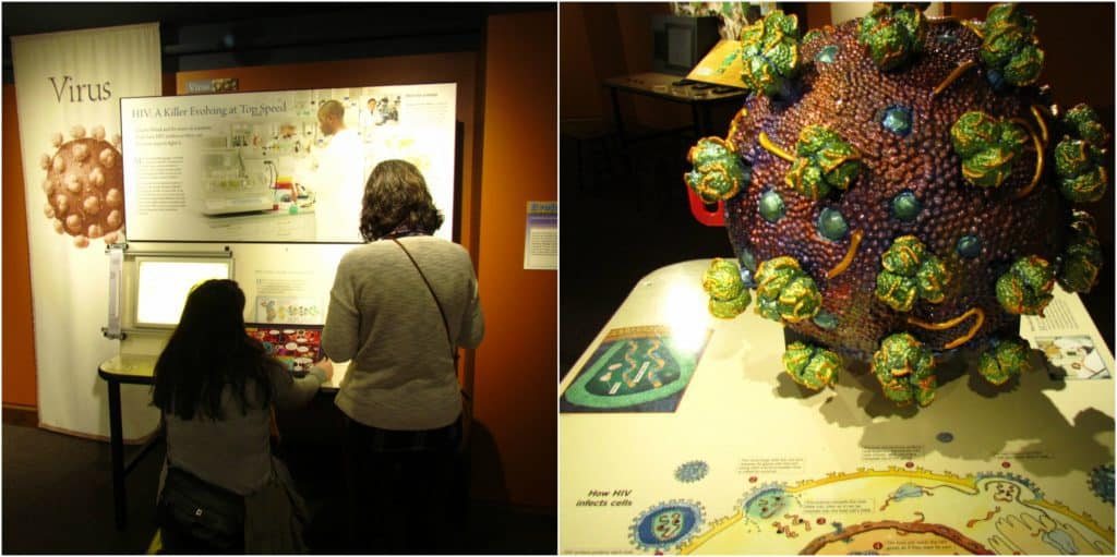 Viruses and microbes are examined in a series of interactive exhibits.