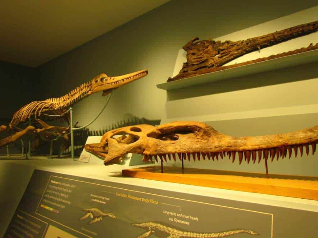 The Natural History Museum at Kansas University holds an impressive collection of dinosaur fossils.