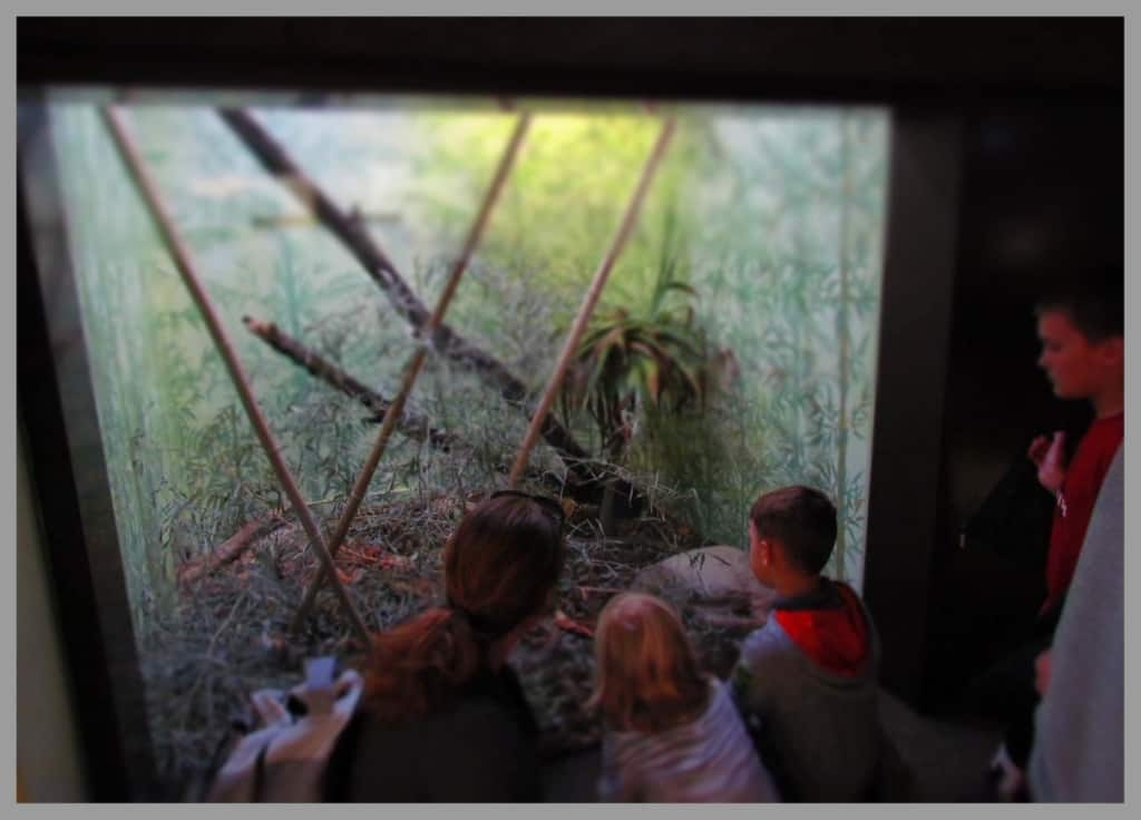 Families interact while observing the displays at the St. Louis Zoo.