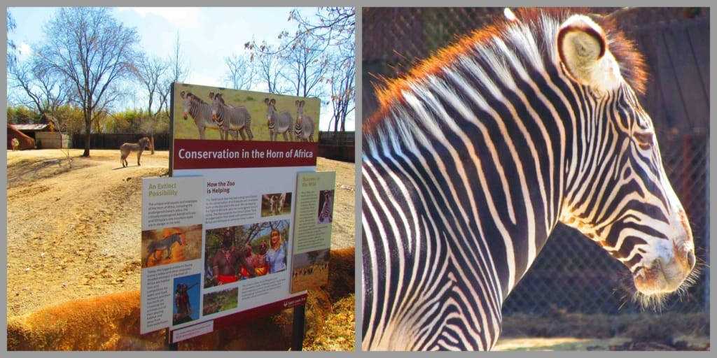 Conservation and ecosystem preservation are two topics taught at the zoo.
