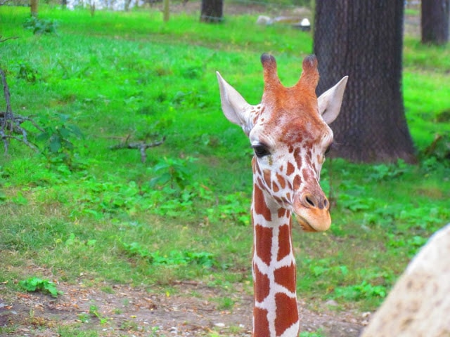 Henry Doorly Zoo - animals - Omaha Nebraska - Family fun - Midwest travel
