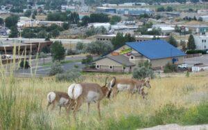 casper, wyoming, antelope, tourism, history, museum
