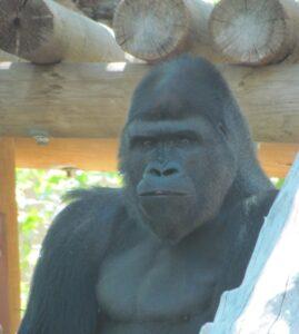 hogle zoo, zoo, salt lake city, utah, park, mountains, travel, tourist, animals, cats, apes, scenic