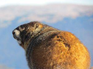 Trail Ridge Road, Estes Park, colorado, moose, elk, wildlife, nature, travel, tourist, auto, scenic drive, Rocky Mountain