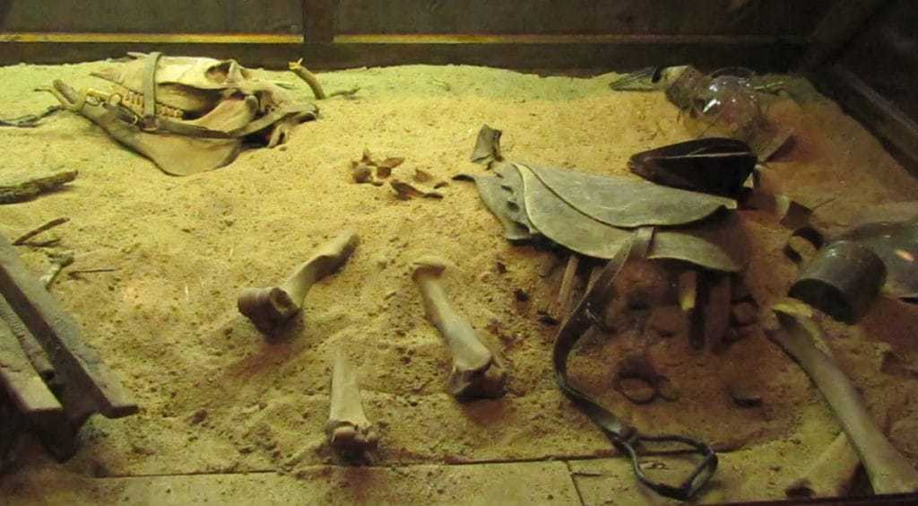 Replica donkey bones are displayed in a sand filled case. These are meant to represent the only life loss from the steamboat disaster.