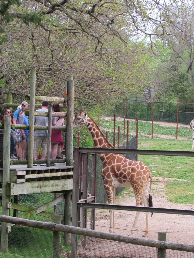 Zebra feeding station.