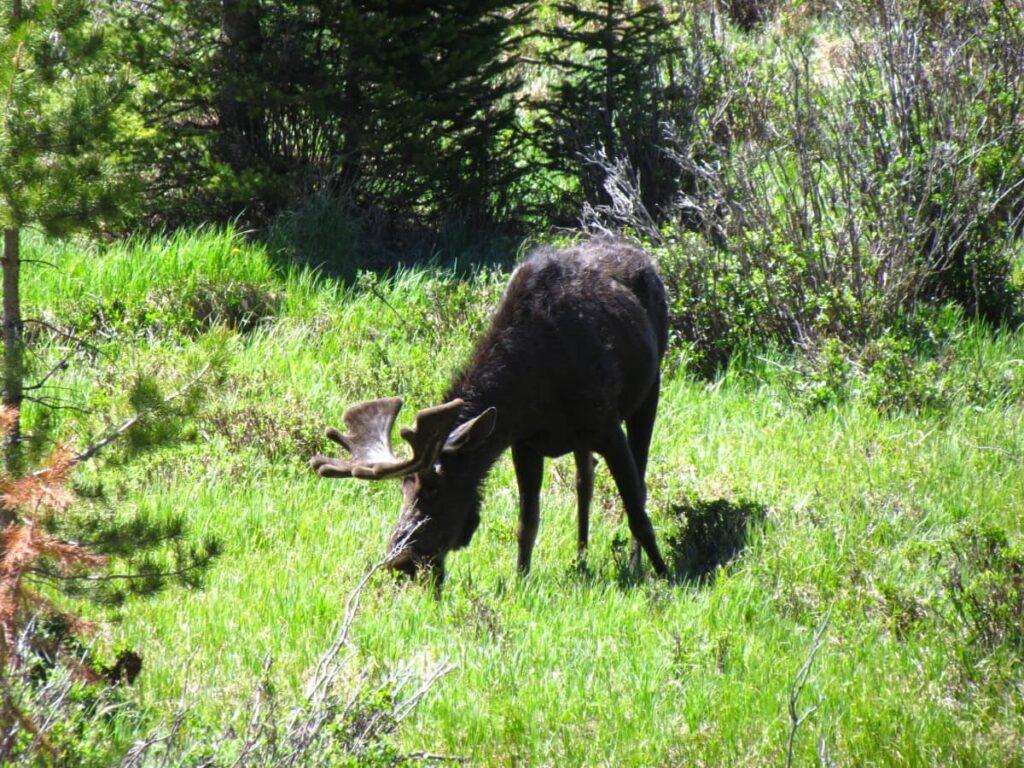 Rocky Mountains - Rocky Mountain National Park - Trail Ridge Road - Hiking
