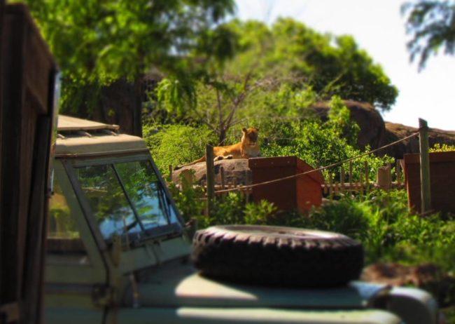 Sedgwick Zoo - Zoos - Elephants - Wildlife Park