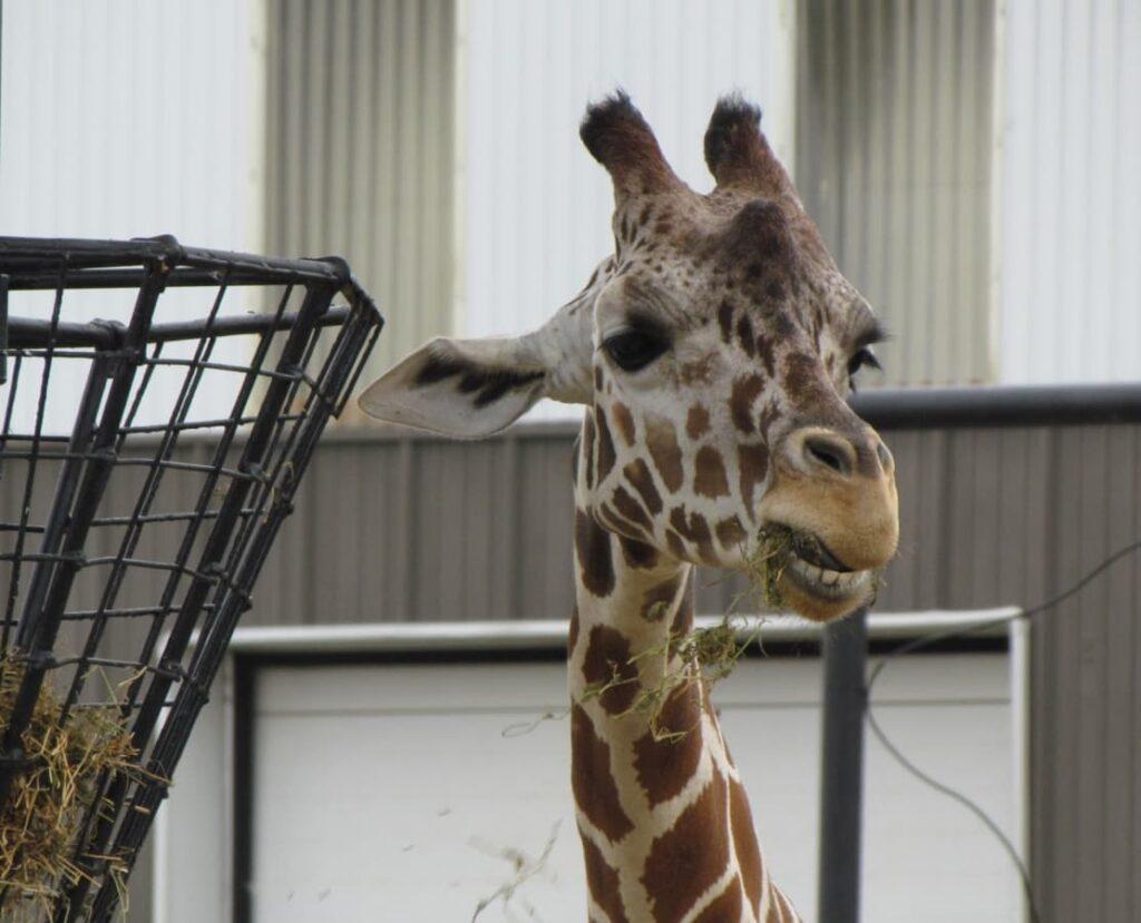 Rolling Hills Zoo - Salina Kansas - Midwest travel - zoological parks - wildlife - animatronics