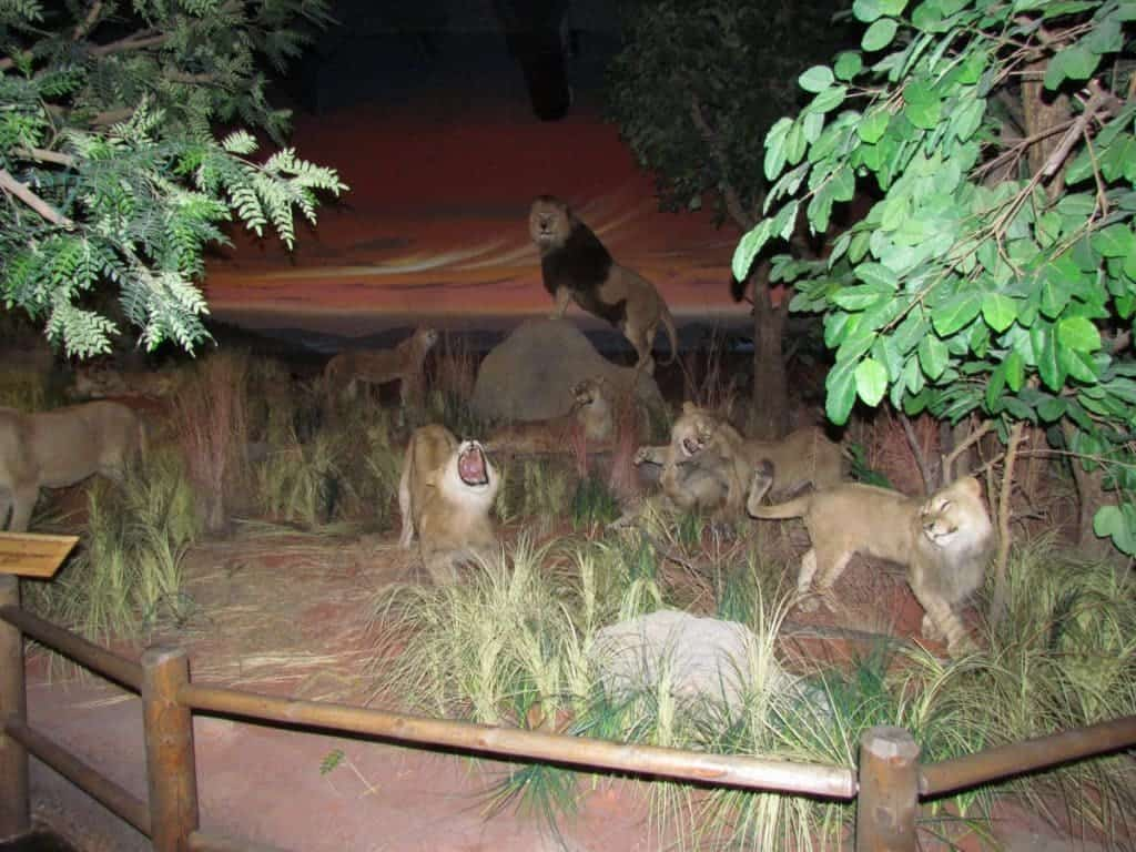 Rolling Hills Zoo - Salina Kansas - Midwest travel - zoological parks - wildlife