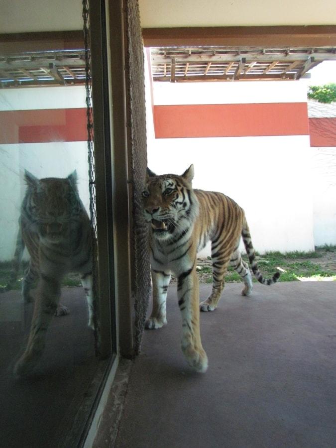 Sedgwick Zoo - Zoos - Elephants - Wildlife Park - Wichita attractions