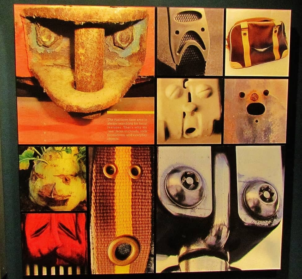 Fusiform display showing everyday objects that look like faces.