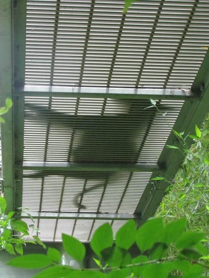 Philadelphia Zoo-animals-360 degrees-overhead trails-zoos-wildlife-endangered species-Philadelphia