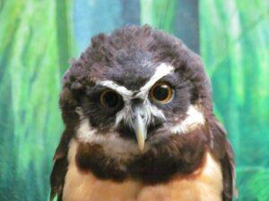Tulsa Zoo-Tulsa-Oklahoma-wildlife-zoological park-Lost Kingdom