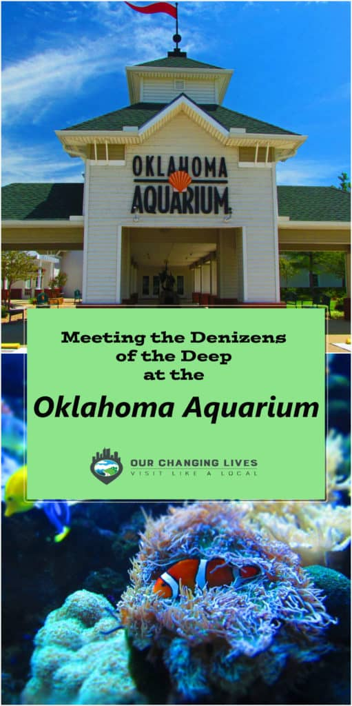 Oklahoma Aquarium-Tulsa Oklahoma-sea life-Bull sharks-octopus-fish-sea turtles