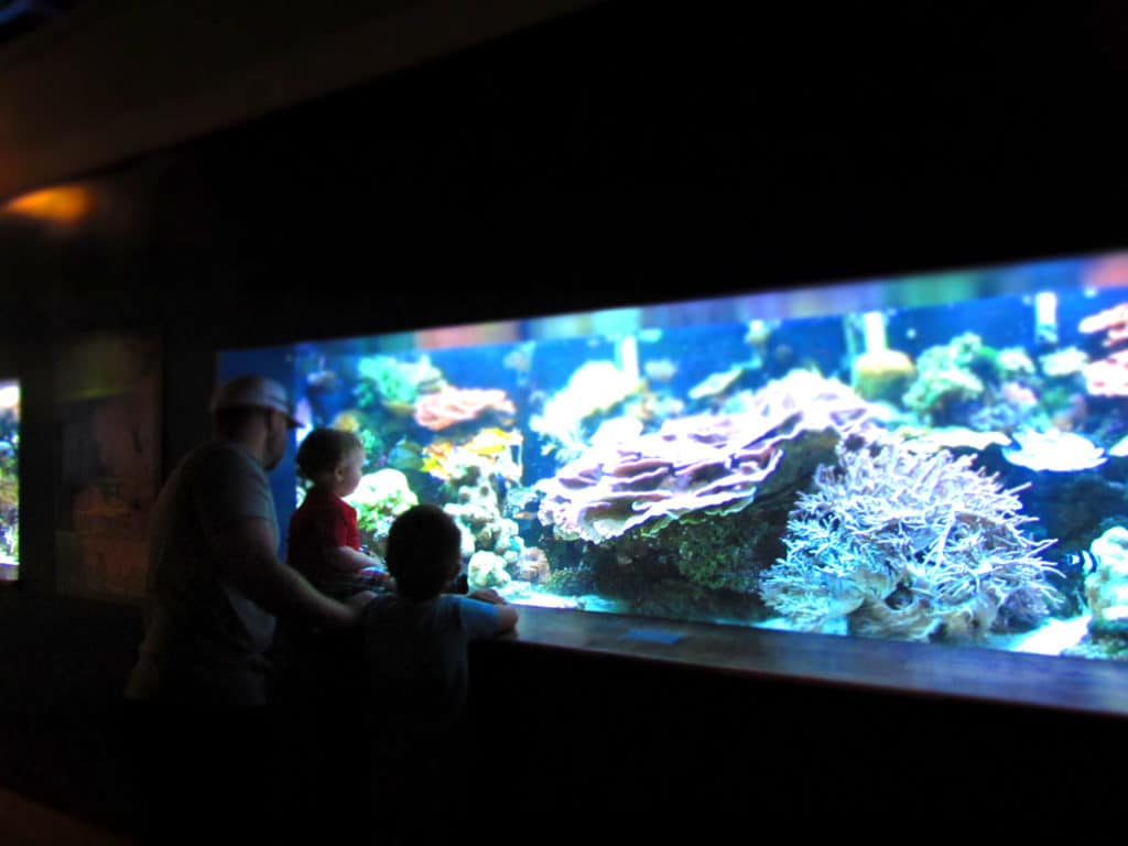 Various sea life species are found throughout the aquarium.
