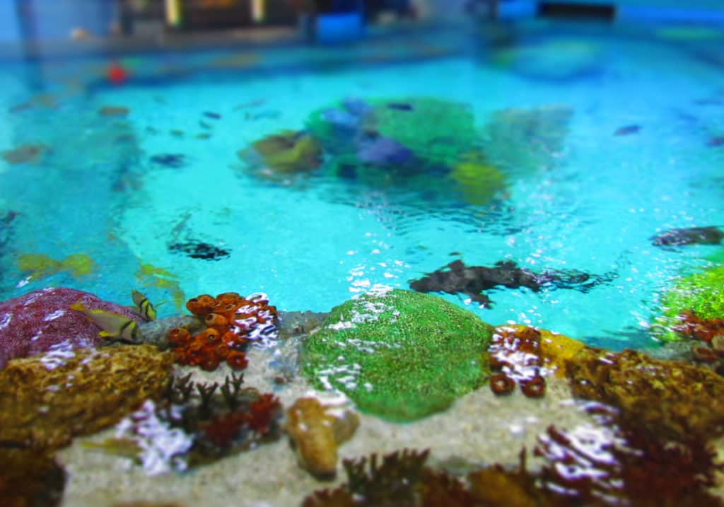 A replica of a coral reef tide pool holds an assortment of tropical fish.