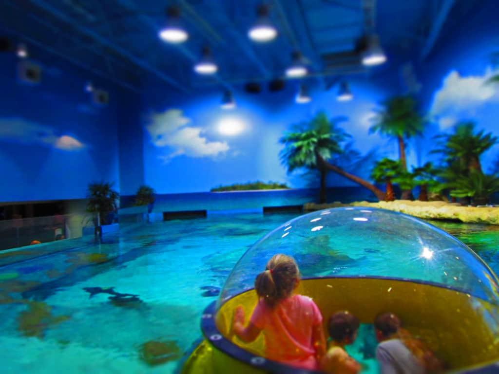 Oklahoma Aquarium-Tulsa-sea life-ocean creatures-sharks-octopus-turtles-fish