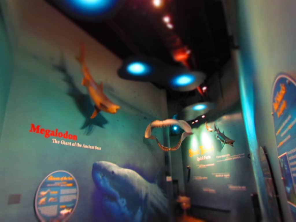 An educational area explains information about sharks.