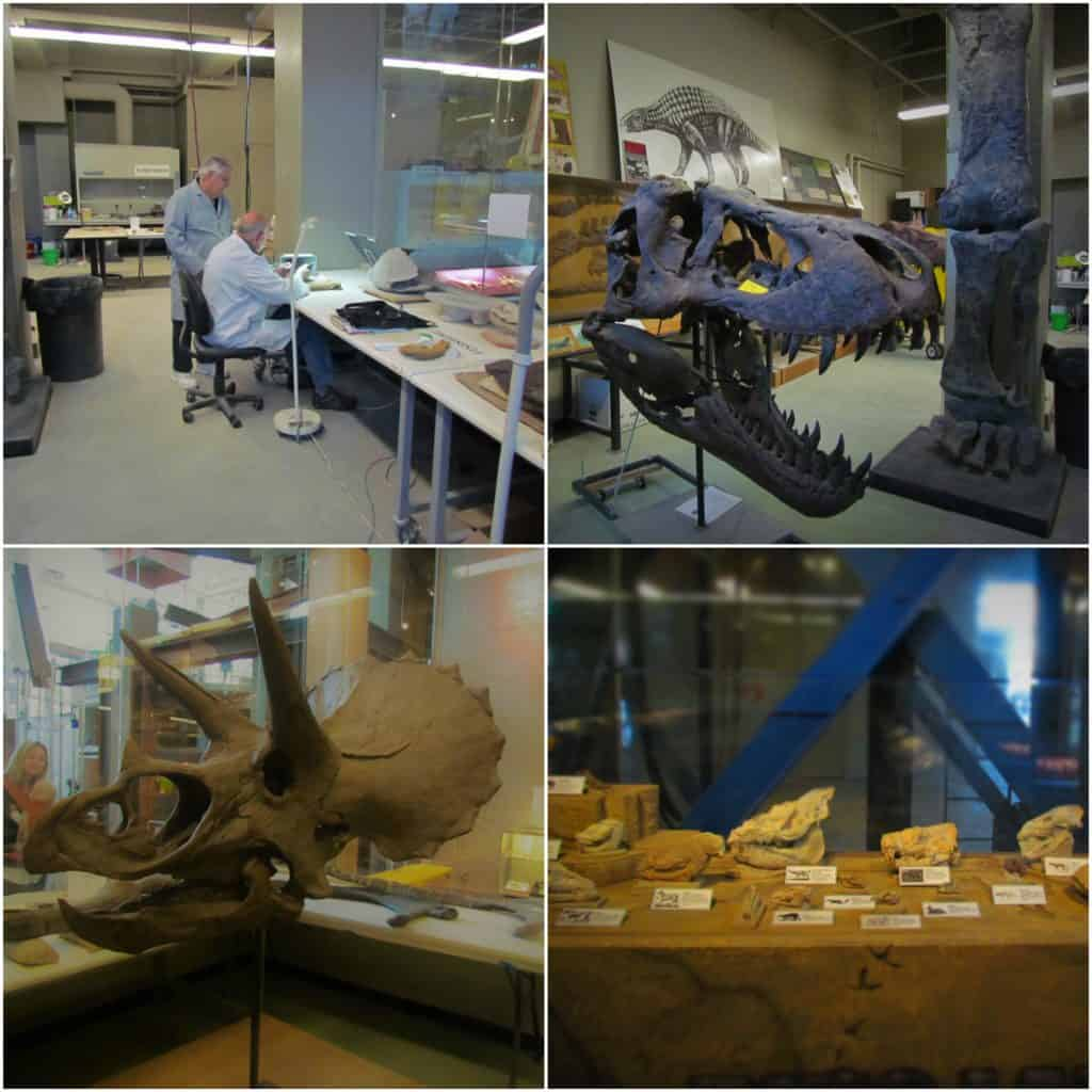 In the dinosaur lab the volunteers work to prepare specimens for display.