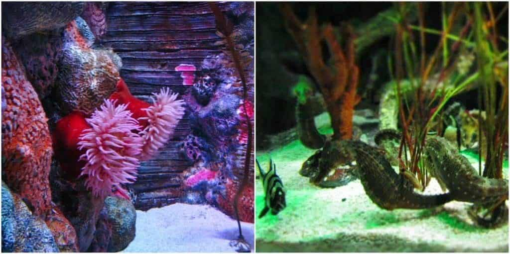 Sea anemones and sea horses are two of the popular marine creatures on exhibit.