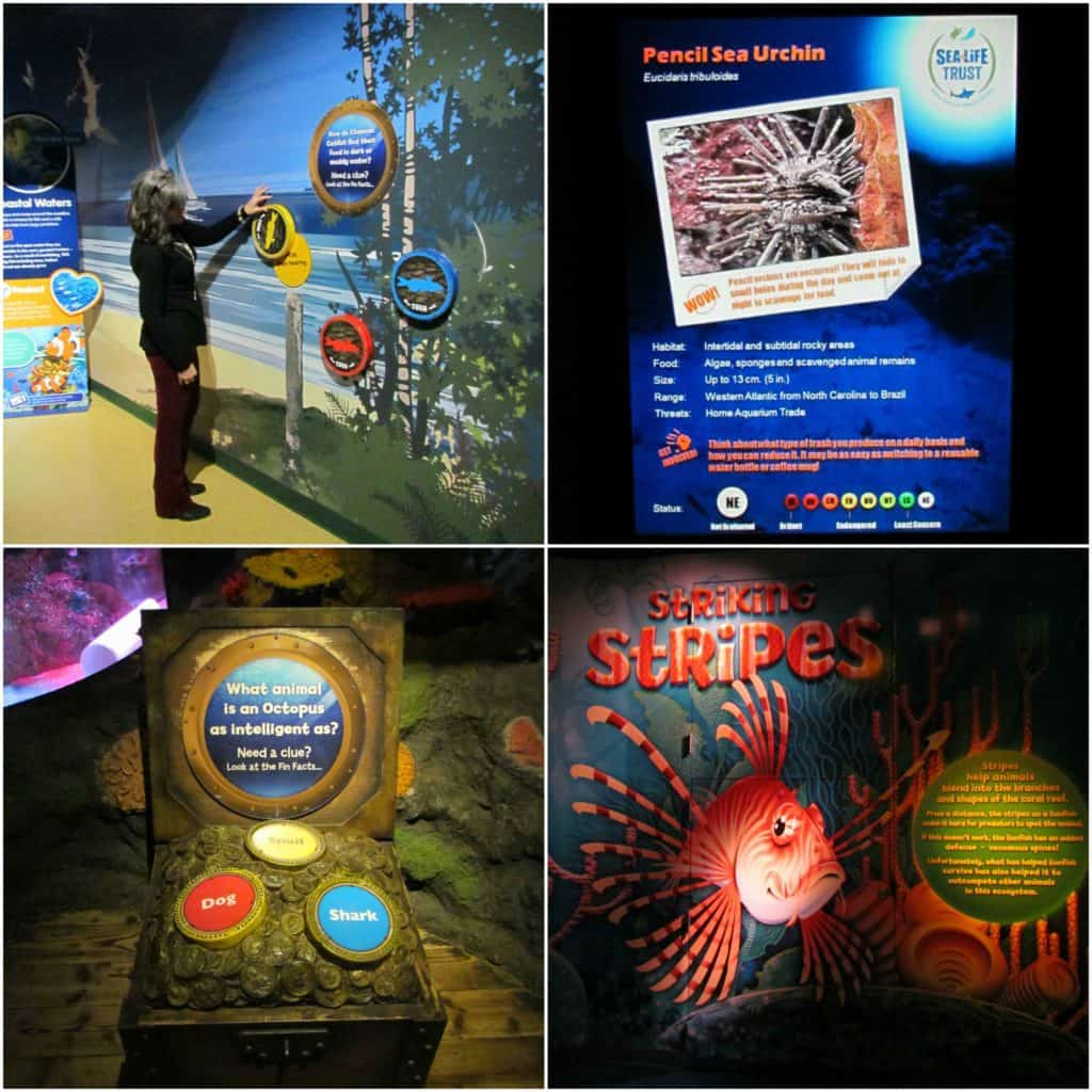 Sea Life Kansas City has lots of educational displays scattered throughout the science center.
