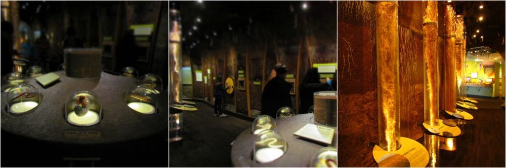 The underground area showcases the grass roots, insects, and animals the live below the surface of the Flint Hills.