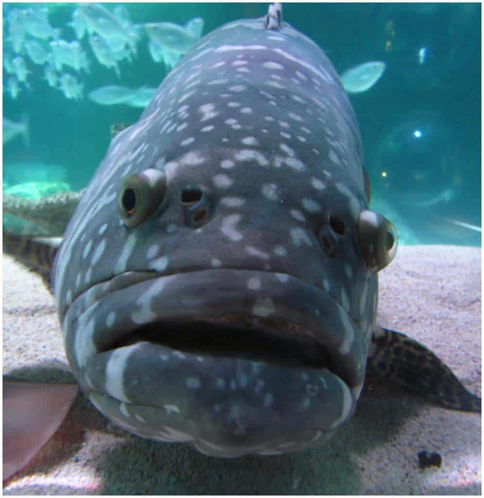 Sea Life kansas City-Crown Center-Kansas City-ocean life-marine-fish-sharks-jellyfish-starfish-sea dragons-manta ray
