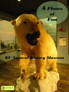 Kansas University-Natural History Museum-science-fossils