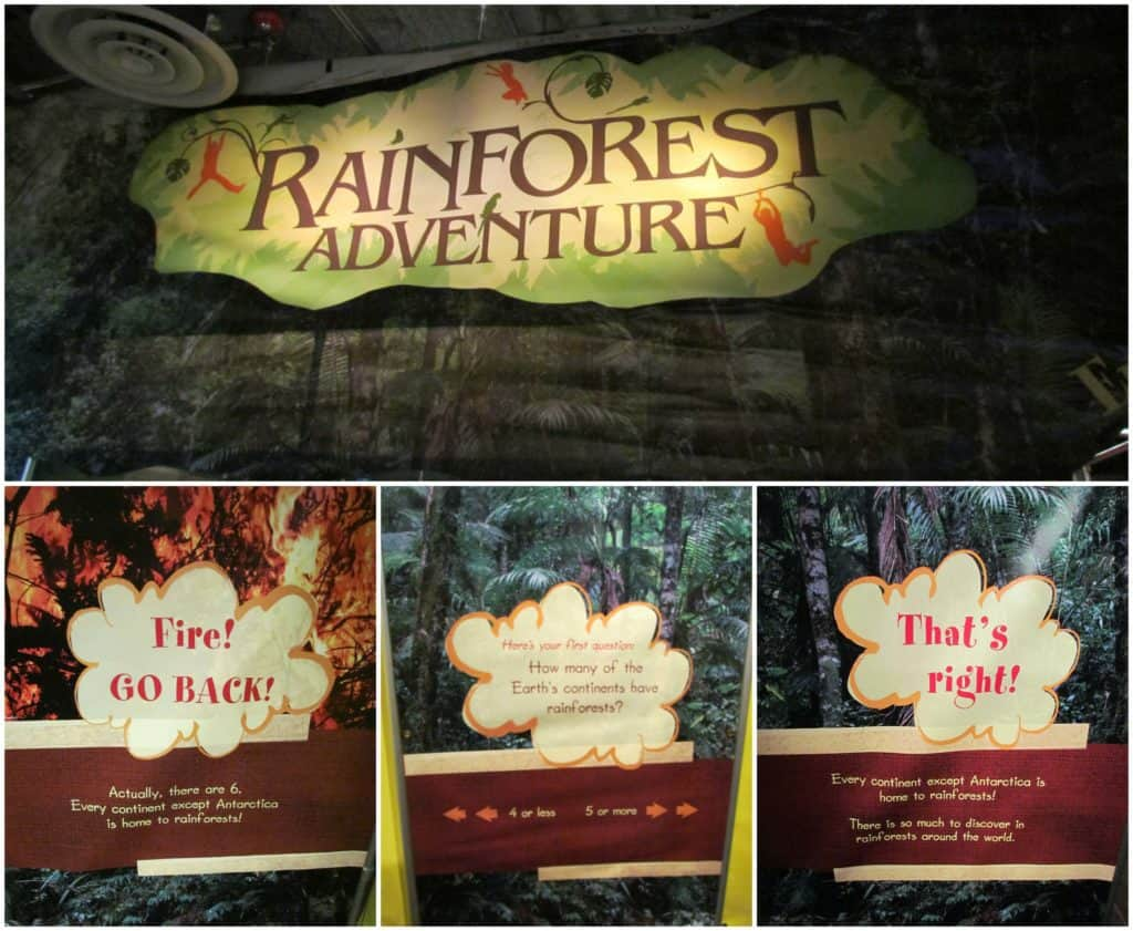 An area is dedicated to temporary rotating exhibits like the Rainforest Adventure that runs through April 2018.
