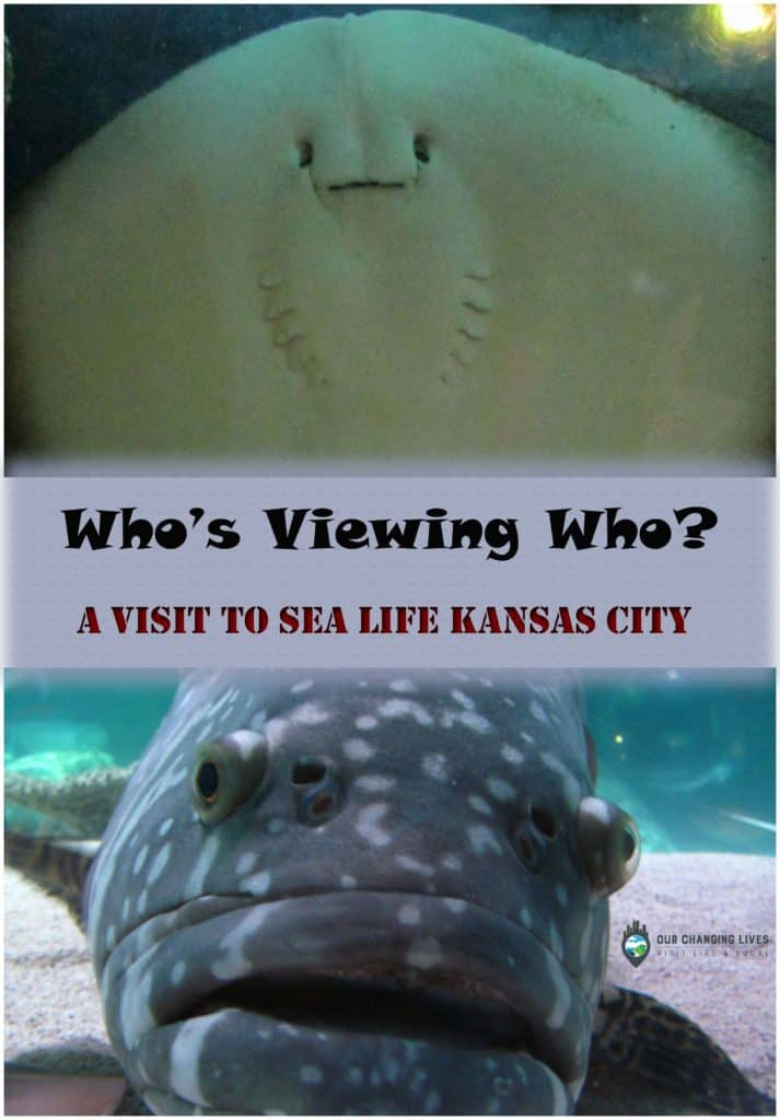 Sea Life kansas City-Crown Center-Kansas City-ocean life-marine-fish-sharks-jellyfish-starfish-sea dragons-manta ray