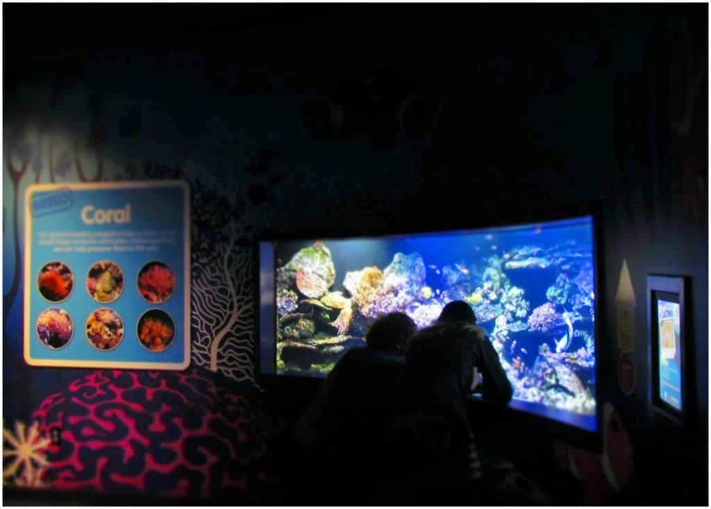 Visitors to Sea Life enjoy watching species that inhabit the coral reefs.