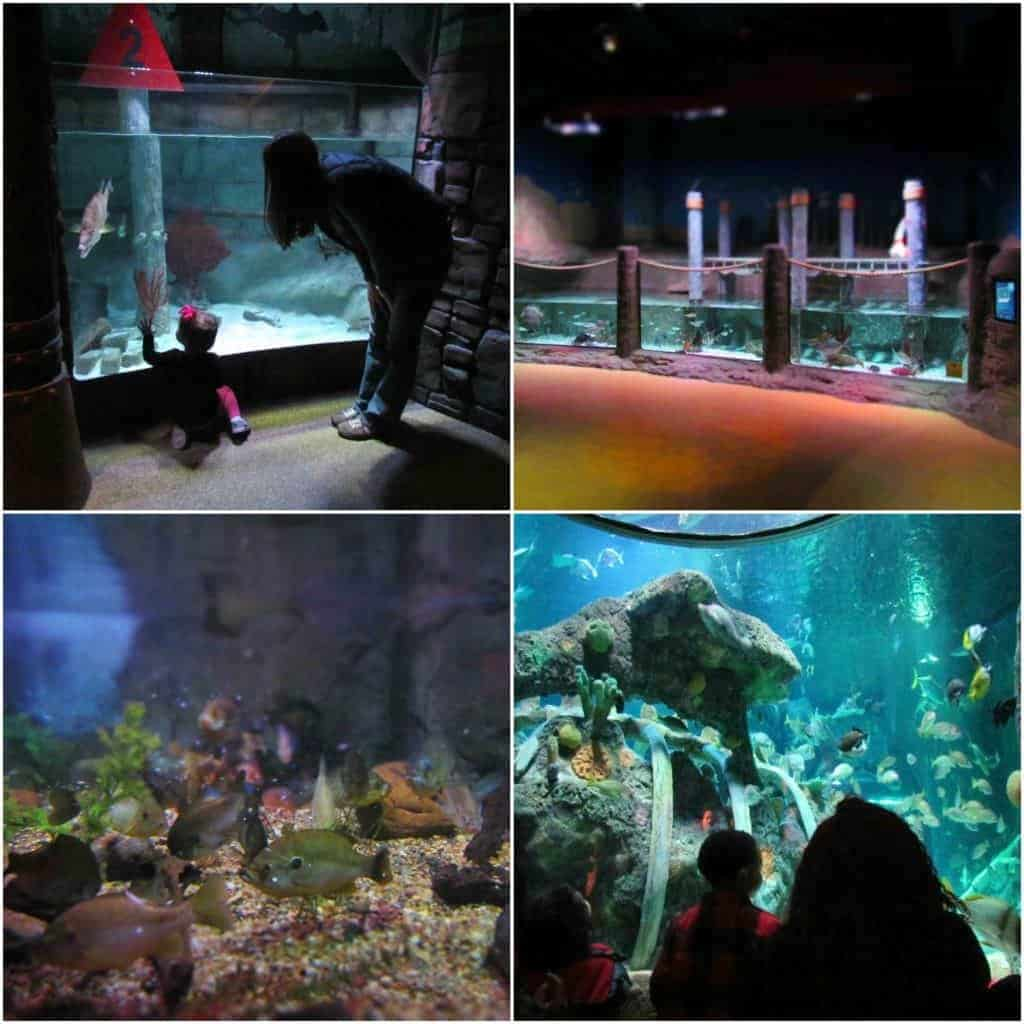 Sea Life offers plenty of tanks at a height just perfect for kids to view.