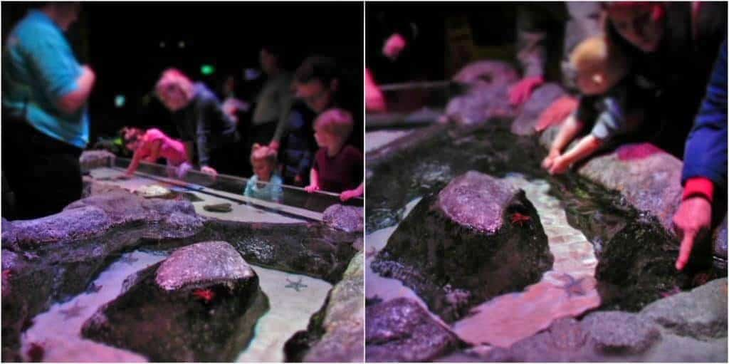 A touch pool allows visitors to get up close and personal with starfish.