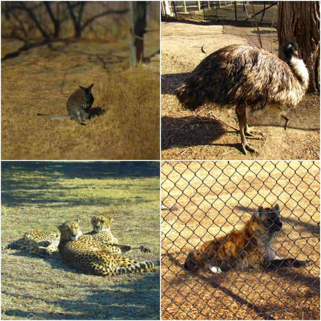 An assortment of animals can be found at the Sunset Zoo in Manhattan, Kansas.
