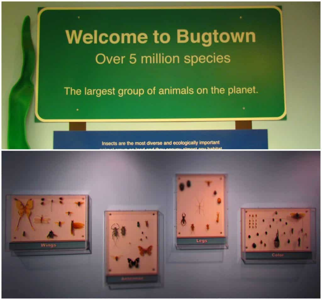 Bugtown is home to displays on the most numerous inhabitants on our planet.