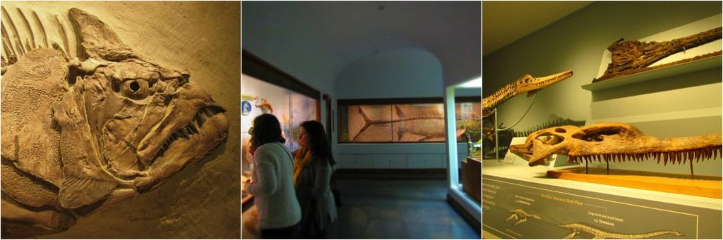 KU Natural History Museum is home to a variety of fossils from creatures that once roamed the seas that covered the land.