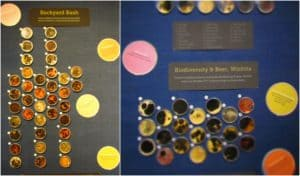An assortment of petri dishes holding cultures collected from assorted locations.