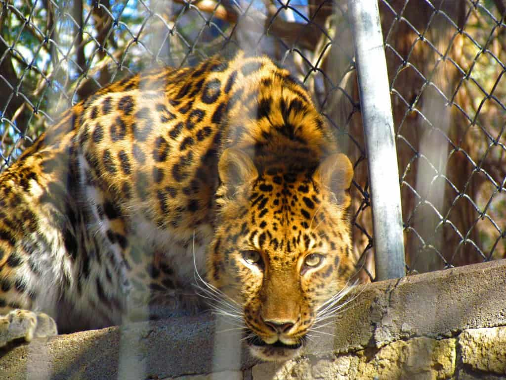 Manhattan, Kansas-Flint Hills-Riley County-restaurants-zoo-museum-nature center-daytrip