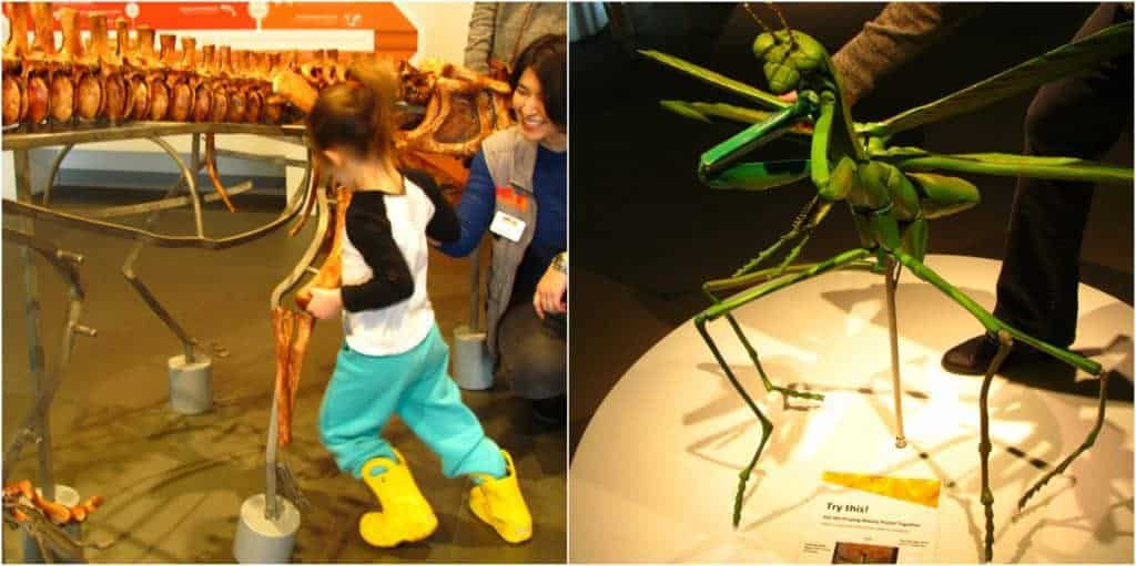 Various models allow visitors to assemble dinosaurs and bugs.