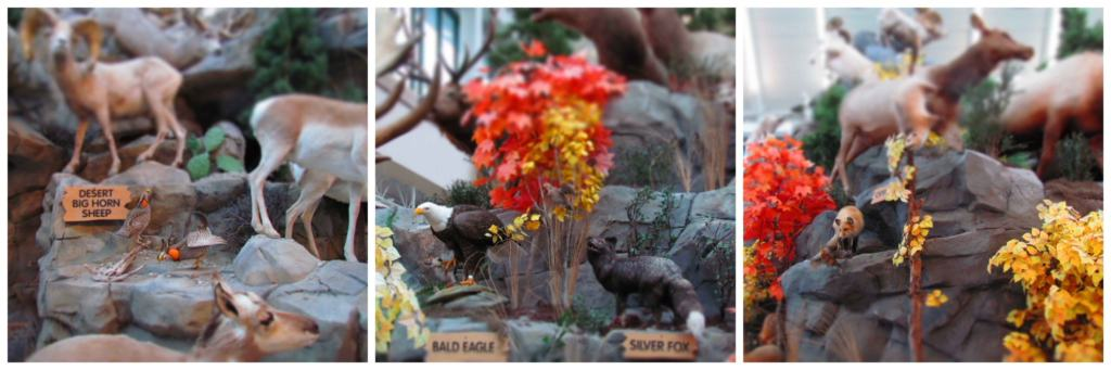 The animal specimens on display help visitors identify them easier in the wild.